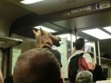 列車の中に馬