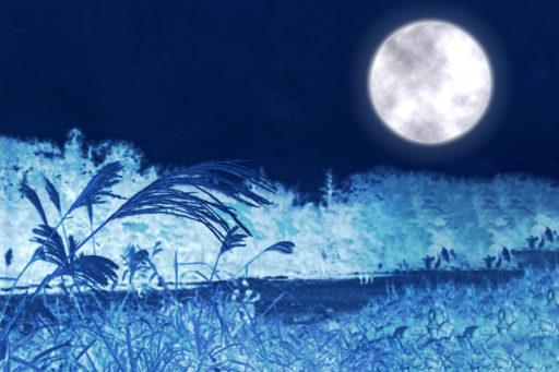 中秋の名月