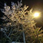 東京へ行ってきました。-夜桜綺麗です140413