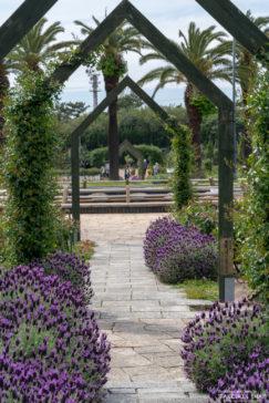 浜寺公園ラベンダー