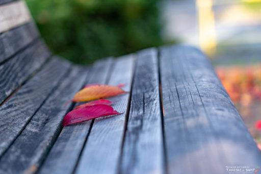 ベンチと落ち葉